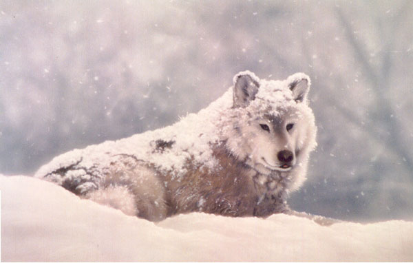 Randy Nagle - Snow Wolf World Class Artist