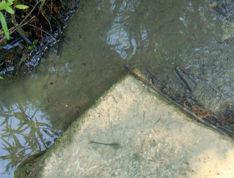 Ancient Fish Trap | 90 dgree corner World Class Artist
